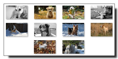 Theme Chien pour Windows 7