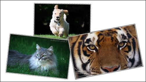 Magnifique Thèmes gratuits pour Windows 7 - Animaux : Chien - Chat - tigre